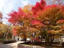紅葉が見頃になると敷地内の木々が赤く染まります