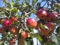 秋の味覚♪西日本最大のりんご園★徳佐のりんご狩りに行こう♪♪津和野から車で15分♪♪