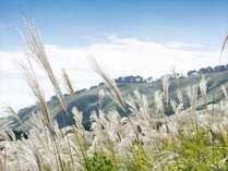 【稲取細野高原】秋には黄金色のすすき野原が一面に広がる。広さは箱根仙石原の約7倍!隠れた絶景スポット