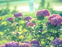 伊豆を彩る初夏の花