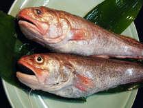 *夕食一例/浜名湖産の新鮮な魚介類をご提供しています。