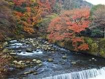 紅葉する早川