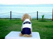 「浜名湖まで3歩!☆【ワン泊プラン】4つ星☆グルメ浜名湖和会席料理の湖畔宿、絶景ドッグラン無料!