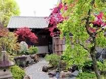 梅は新緑に、そして桃の花がピンクの大きな花を咲かせます。モミジも葉がでてきました。