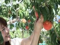 夏休み桃狩りに出かけよう♪ 提携農園の桃狩り・桃食べ放題券付!! 【信玄(伊佐木香草焼)プラン】