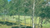 テニス(アウトドアコート)