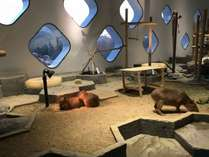 不死王閣から車で30分!エキスポシティにある体験型水族館NIFREL,大阪府,伏尾温泉 不死王閣