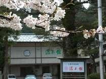 桜の木の下からみた湯本舘全貌です