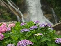 【6月限定】梅雨をHAPPYに過ごす!4万株のあじさいが咲く見帰りの滝へ-1泊朝食&嬉しい特典付-