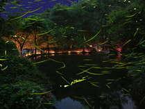 ◆【ほたる鑑賞の夕べ】幻想的なほたるの光をぜひご覧ください♪