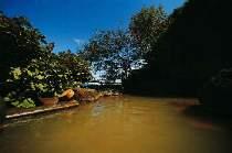 露天風呂(殿方)伊香保ならではの「黄金の湯」源泉100%かけ流し