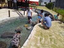 施設内の池には自由に入れます。水遊びや魚とのふれあいをお楽しみください♪