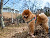 *看板犬♪ちょみのオススメ散歩コース紹介します
