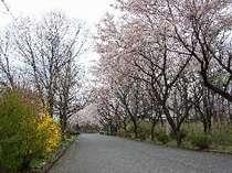 静かな別荘地に佇む。ダイアナ館前は別荘地の桜並木。5月中旬までお花見もOK。