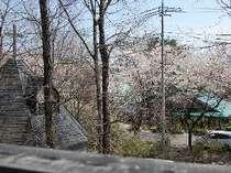 ダイアナ館南側客室からの眺望。お部屋から桜並木が見えます。