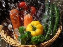 新鮮な全国の元気野菜をお料理に活かしています。