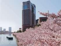 ~春~桜に包まれる帝国ホテル大阪