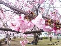 【お花見満喫】青い空と淡いピンクの桜の競演♪南紀彩りプラン1泊2食