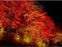 【平日限定】 秋の紅葉と自慢の温泉入浴剤・お土産付プラン