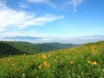 ★車山高原のニッコウキスゲとビーナスライン