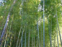 【8月8日~15日のお盆限定】竹林を涼しい風が吹き抜ける・・・夏野菜たっぷり創作会席プラン♪