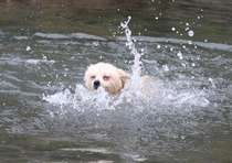 波静かな西伊豆で愛犬と海水浴♪