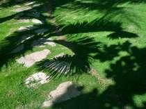 ☆お部屋までお散歩♪いろんな形の葉っぱが映し出されます。