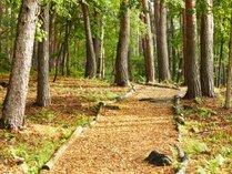 森の遊歩道 敷地内の遊歩道はお散歩に最適。わんちゃんとの素敵な時間をお過ごしください。