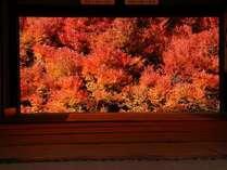 【11月末迄限定】秋定番!温泉巡り×紅葉狩り×但馬の秋のご馳走 日本の秋を五感で感じる!