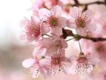 【桜シーズン限定】春旅が更に楽しくなる♪桜ドリンクなど、嬉しい限定特典付きお花見プラン!