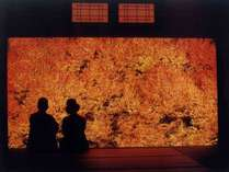 【紅葉シーズン】\\秋色の城崎温泉街を大満喫//旬の食材の香りひろがる秋旅大満足プラン