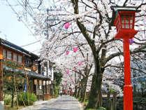 【桜シーズン×4月限定】桜の名所「神武山公園」や「出石城跡」で昼夜愉しむお花見!春の旬な2食付プラン
