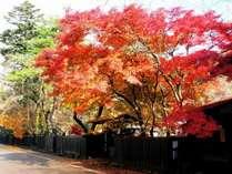 紅葉シーズンも美しい『角館武家屋敷』までお車で約30分♪