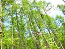 大自然の中で空を飛ぶ!アドベンチャーパーク「ムササビ」のロングジップライン