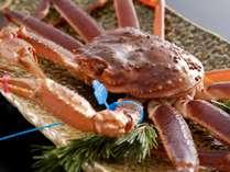 ブランド蟹「松葉かに」。青いタグが付いた津居山蟹です。
