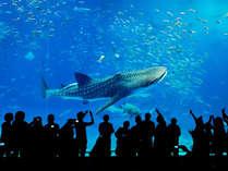 世界最大の魚・ジンベエザメ。感動と興奮をお楽しみください。(画像提供:海洋博公園・沖縄美ら海水族館)