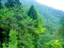 当館からは豊かな白山の自然がご覧いただけます。