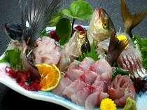 新鮮地魚盛り合わせ