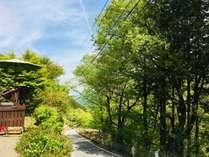 平日限定!!初夏の新緑を楽しむ、期間限定素泊まりプラン☆