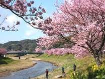 みなみの桜と菜の花まつり(2/10-3/10)