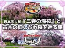三春の滝桜と古木の紅しだれ桜を巡る旅~バス観光プラン~(朝食付)