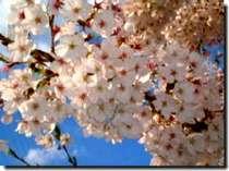 【桜】東北の春を楽しむ!【G.W春御膳宿泊プラン】