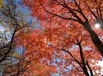 青空と紅葉のコントラストが心を癒してくれます
