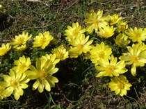 【お花好きにおすすめ】【小さい春み~つけた】【平日限定】春の花鑑賞プラン