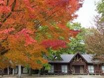 コテージからも紅葉をお楽しみいただけます。