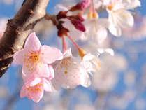 【春はそとポ!】\!!ポッキーをご持参で!!/特典が貰える、春のご旅行応援プラン♪