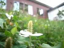 当館の周りには自然がいっぱい☆季節の草花が咲きほこります。
