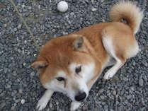 【愛犬と一緒の旅行♪】大切なわんちゃんも一緒に行きたいワン♪小型犬無料★