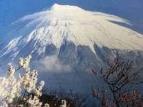 ★[富士山」と「梅」「桜」の絶景を楽しむ【まるごとお花見プラン】★お友達同士、ファミリーにオススメ♪