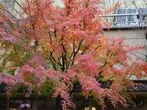 大浴場へ向かう中庭の紅葉